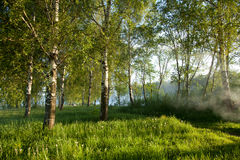Mañana soleada del verano Fotografía de archivo