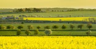 Mañana soleada hermosa de la primavera en un campo Imagenes de archivo