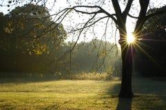 Mañana a través del árbol de nuez Foto de archivo