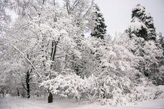 Mañana triste pensativa del invierno en campo nevoso Imágenes de archivo libres de regalías