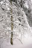 Mañana triste pensativa del invierno en campo nevoso Imagen de archivo libre de regalías