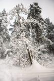Mañana triste pensativa del invierno en campo nevoso Fotografía de archivo