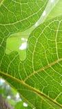 Mañana verde Fotos de archivo