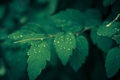Mañana verde del verano Imagen de archivo