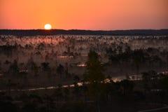 Mañana y salida del sol de niebla en el pantano foto de archivo libre de regalías