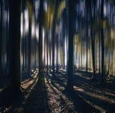 Mañana y salida del sol en el bosque fantástico Foto de archivo