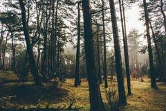 Mañanas tranquilas en los bosques f Inglaterra foto de archivo libre de regalías