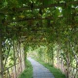 mała ścieżka Zdjęcie Royalty Free