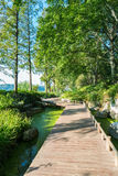 Mała ścieżka jeziorem Fotografia Royalty Free