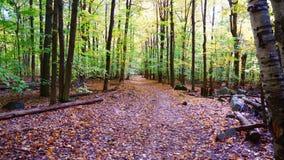 Mała ścieżka w lesie fotografia royalty free