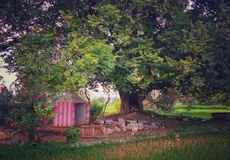 Mała świątynia pod drzewem fotografia stock