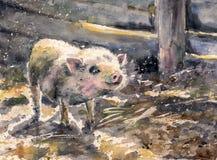 mała świnia royalty ilustracja