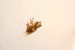 Mała żaba na ścianie Zdjęcie Stock