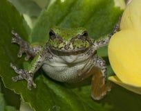Mała żaba na roślinie Obrazy Royalty Free