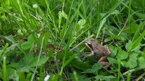 Mała żaba skacze z ramy zdjęcie wideo