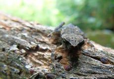 Mała żaba z naturalnym backround zdjęcia royalty free