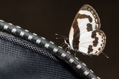 Mała biała brown motylia łasowanie kopalina od plecaka Fotografia Stock
