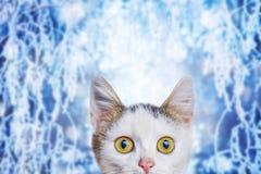 Mała biała figlarka na zimy tle z śmiesznym spojrzeniem przy obraz stock