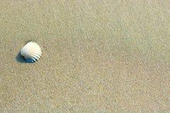 Mała biała skorupa na piaskowatym tle, selekcyjna ostrość Zdjęcie Stock