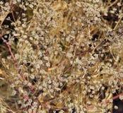 Mała białych kwiatów tekstura Zdjęcie Stock