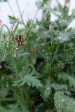 Mała brown pająk wspinaczka pajęczyny w ogródzie obraz stock