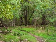 Mała brud ścieżka przez bujny zieleni lasu fotografia stock