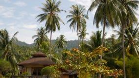 Mała bungalow pozycja wśród kokosowych palm Wygodny dom otaczający tropikalnymi egzot roślinami na idyllicznym tle zdjęcie wideo