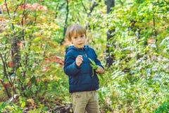 Mała chłopiec w jesień parku fotografia stock