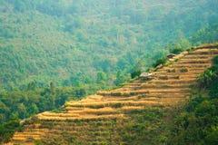 Mała chałupa i mały gospodarstwo rolne na Anghkang halny Chiang M Obraz Royalty Free