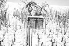 Mała chałupa w zima winnicach Pekin, china Zdjęcie Stock