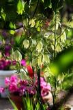Mała część domu ogród Dekoracyjna jukki roślina Zdjęcia Stock