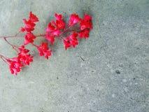 Mała Czerwona kwiat gałązka Fotografia Stock