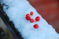 Mała czerwona owoc na śniegu Obrazy Royalty Free