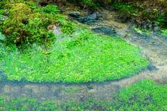 Mała Czysta rzeka i zieleń Przerastający brzeg rzeki zdjęcie stock