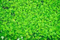 Mała Czysta rzeka i zieleń Przerastający brzeg rzeki obraz stock
