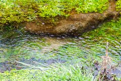 Mała Czysta rzeka i zieleń Przerastający brzeg rzeki zdjęcia royalty free