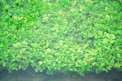 Mała Czysta rzeka i zieleń Przerastający brzeg rzeki zdjęcia stock