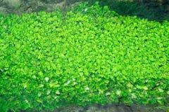 Mała Czysta rzeka i zieleń Przerastający brzeg rzeki zdjęcie royalty free