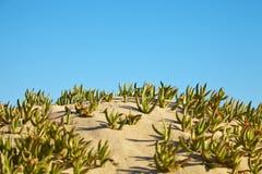 Mała diuna przy plażą Zdjęcie Royalty Free