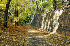 Mała droga blisko ściany w lesie Zdjęcia Stock