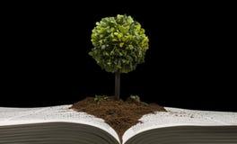 Mała drzewna reprezentuje wiedza i mądrość obrazy stock