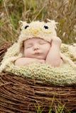 Mała dziecko sowa fotografia royalty free