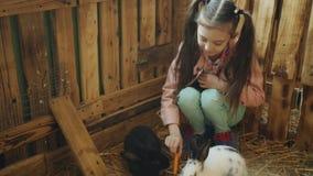 Mała dziewczyna na wycieczkach migdali zoo Dziewczyna żywieniowy królik z marchewką przy migdali zoo zbiory wideo