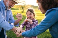 Mała dziewczyna z jej starszymi dziadkami ma zabawę outside w naturze przy zmierzchem Obraz Royalty Free