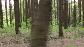 Mała dziewczynka biega w ręki jej matka zdjęcie wideo