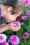 Mała dziewczynka cieszy się z kwiatami Obraz Stock