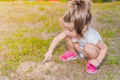 Mała dziewczynka dotyka małe mrówki z ona palcowa na mrówki hil zdjęcia royalty free