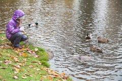Mała dziewczynka karmi kaczki na jeziora wybrzeżu Zdjęcie Stock