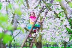 Mała dziewczynka na drabinie w jabłoń ogródzie Obrazy Royalty Free