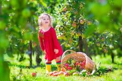 Mała dziewczynka obok zakończonego nadmiernego jabłczanego kosza Obraz Stock